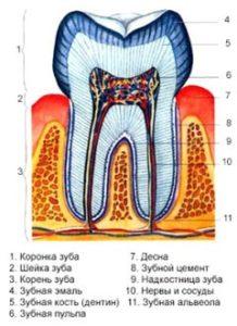 как лечат зубы фото